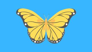 虫が苦手でも嫌いと感じる人は少ない美しい模様の蝶々