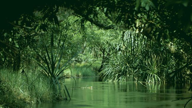苦手な虫がいそうな湿地帯
