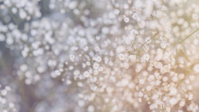 自分の匂いが花のような爽やかな香りだったというイメージ