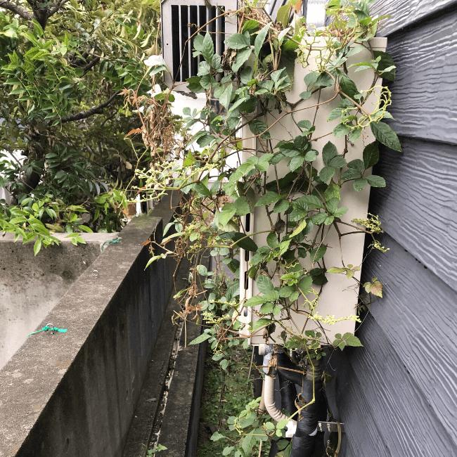 雑草の駆除を行う前のガス給湯器