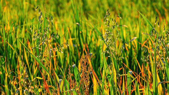 駆除する前の庭にたくさん生えている雑草たち