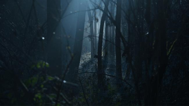 褒められたいと気持ちの影響で森で迷ってしまっている状態